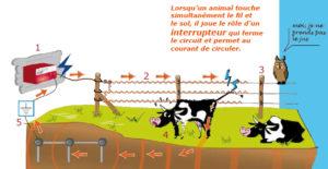 le principe de fonctionnement de l'électrificateur de clôture électrique