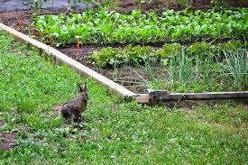 Quelle cl ture lectrique choisir pour mes volailles quelle cl ture lectrique pour lapins - Cloture electrique chat ...